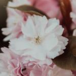Il fiore di Antonio, di Aurora Gastaldi